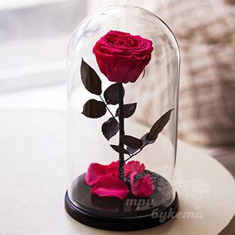 Малиновая роза в колбе 26 см
